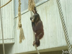 IMG_2635_Burgers_Zoo