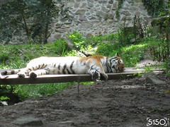 IMG_2646_Burgers_Zoo
