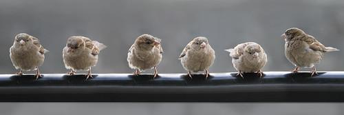 Birds in ålesund