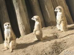 IMG_2499_Burgers_Zoo