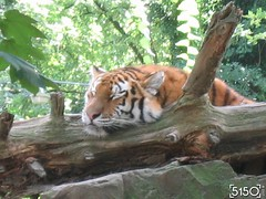 IMG_2689_Burgers_Zoo