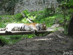 IMG_2649_Burgers_Zoo