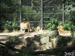 IMG_2500_Burgers_Zoo