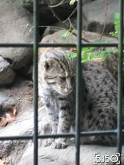 IMG_2658_Burgers_Zoo