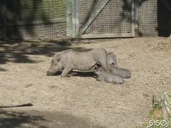 IMG_2492_Burgers_Zoo