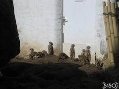 IMG_2497_Burgers_Zoo