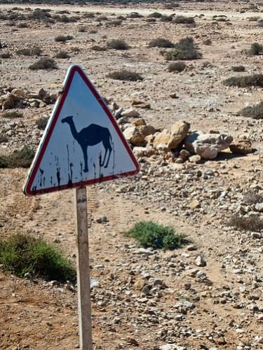 Achtung Kamel
