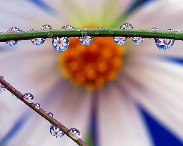 petal pearls