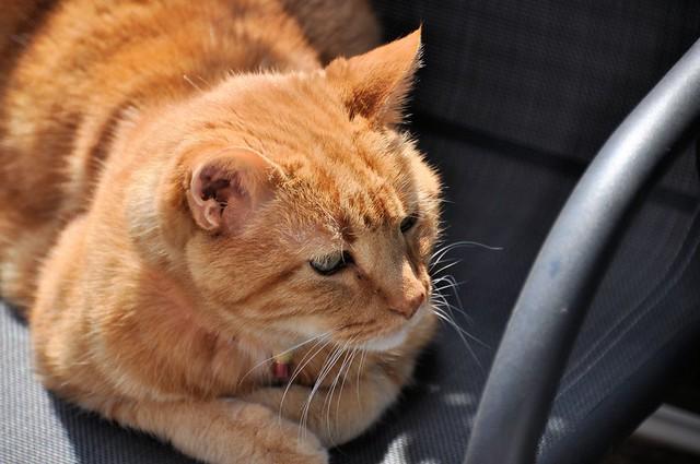Mon chat soleil