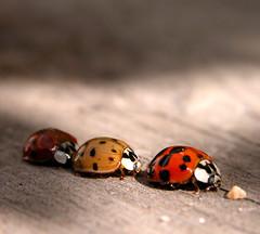 Ladybugs, unknown