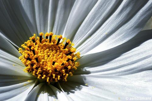 Schöne Blüte II por zeitdiamant
