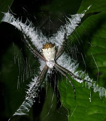Spider in Panama, by artour_a @ flickr