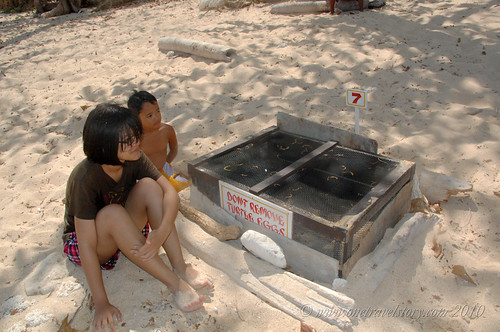 Box 7: Turtle nest, Helicopter Island, El Nido, Palawan
