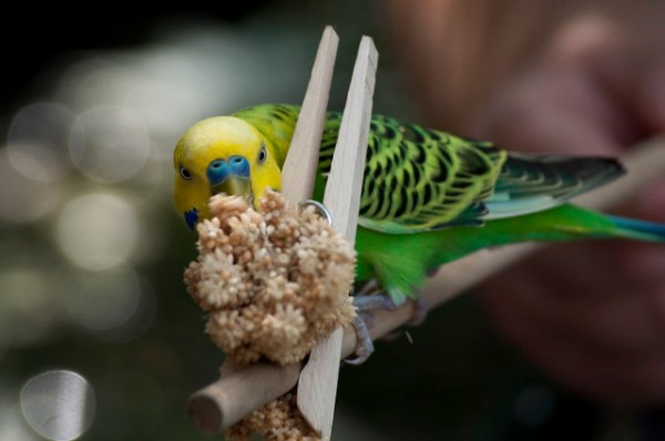 Try using treats to get the bird to pose where you want.