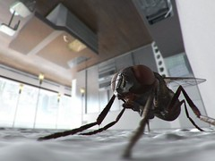 Housefly on ceiling, unknown
