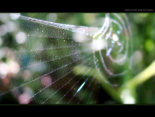 NA TEIA DA ARANHA- In The Net of Spider- FRONT PAGE