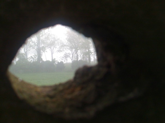 Through the Knothole