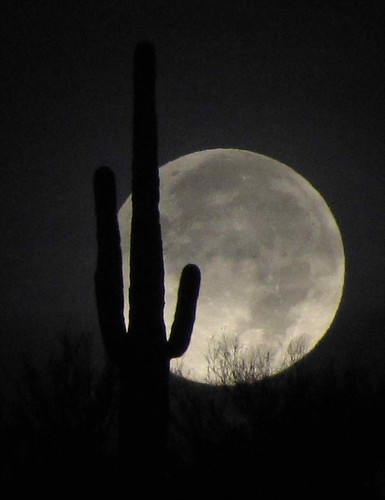 Saguaro Full Moon - Arizona