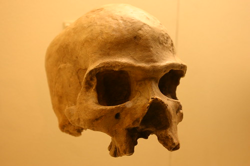 Homo Sapiens 39,000 to 33,000 Years Old