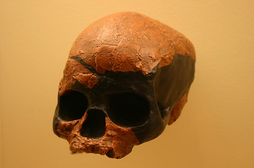 Homo Sapiens 45,000 to 39,000 Years Old