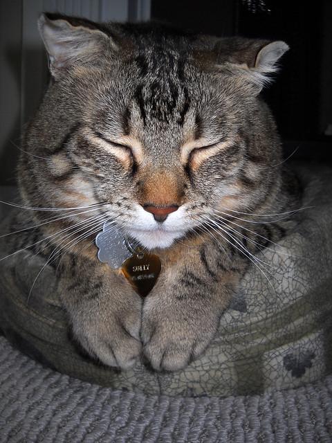 Sleeping Sully