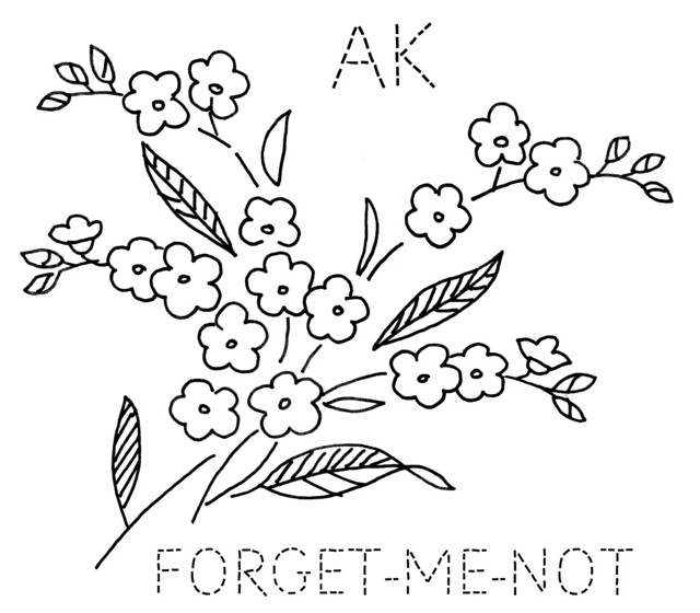alaska forgetmenot  flickr  photo sharing!