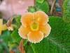 Flor suculenta por Eduardo Deus