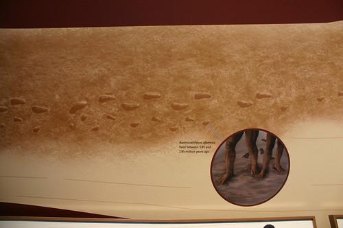 Early Human Footprints