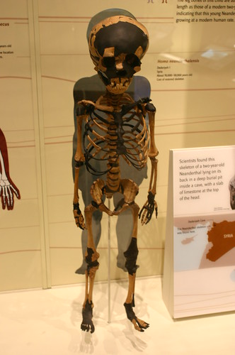 Two-year-old Neanderthal