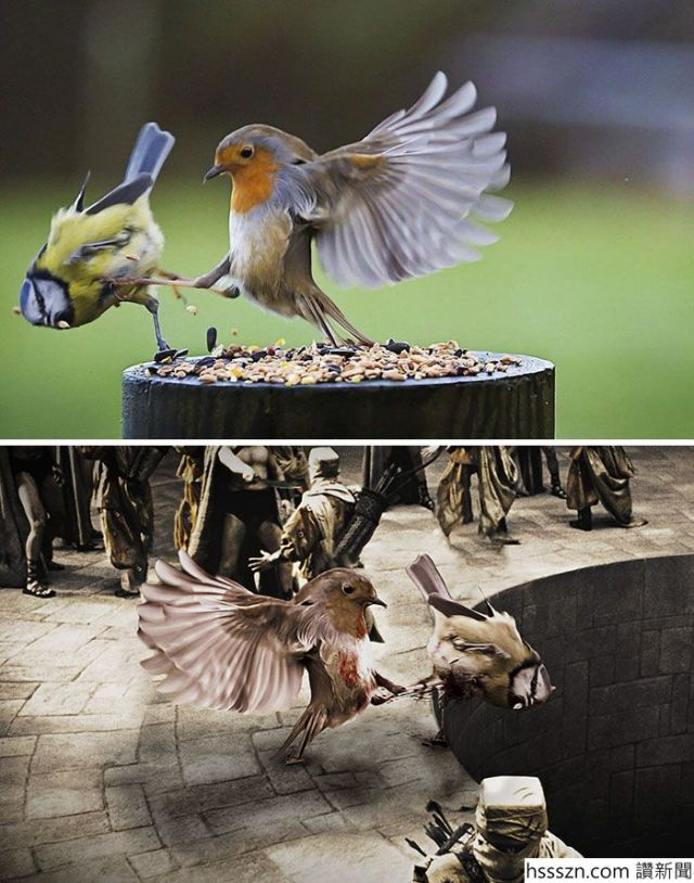 photoshop-battles-ojcp-5951034a8915a__700_700_890