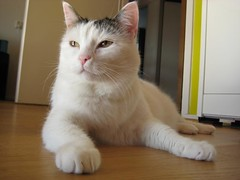 Kodak Moment: Juno