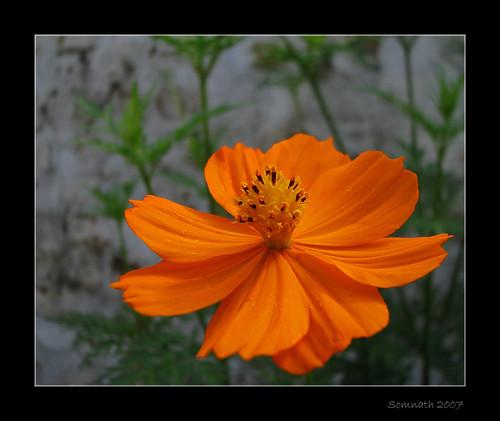 Floral Creature - 8 by Somnath Mukherjee Photoghaphy