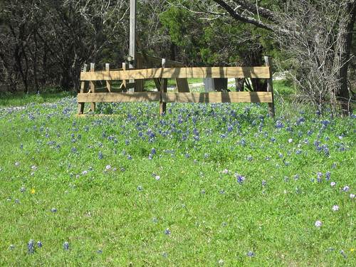 Bluebonnets on the way home