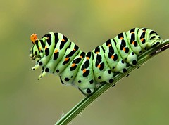 Caterpillar, by moskaev