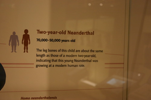 Three-year-old Australopithecus afarensis and Two-year-old Neanderthal