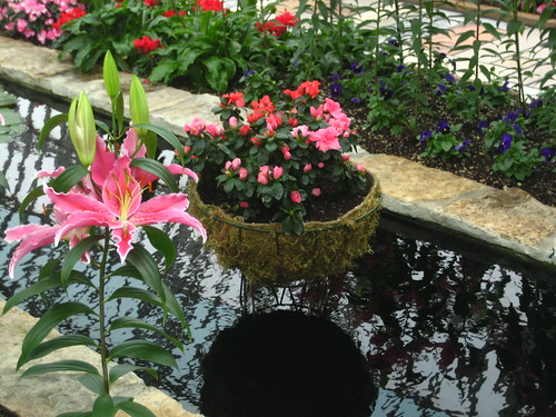 Como Park and Conservatory - Flower Room, February 05 2010