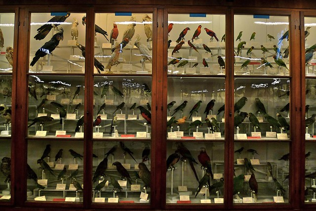 Bird exhibit at La Specola by Darren and Brad on Flickr