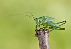 Grasshopper, by Fotokotz