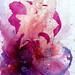 Cupid & the Ravishment of Psyche | Mixed Media Drawing