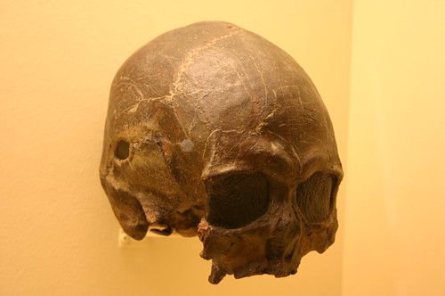 Homo Sapiens 4,700 Years Old
