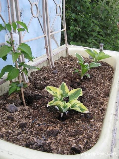 Sand's Allotment & Garden