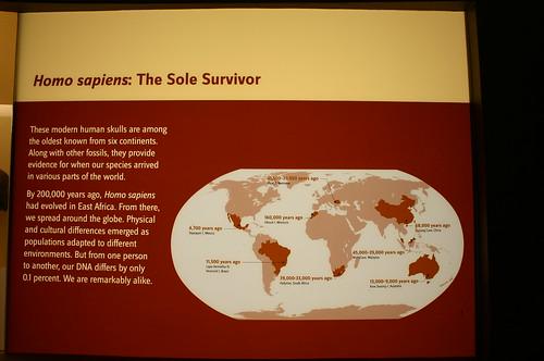 Homo sapiens: The Sole Survivor