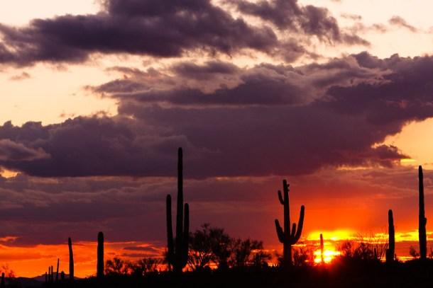 Saguaro Glow