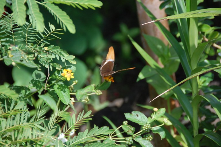 See the Butterfly Farms