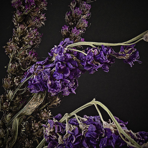 Lavender for Flies