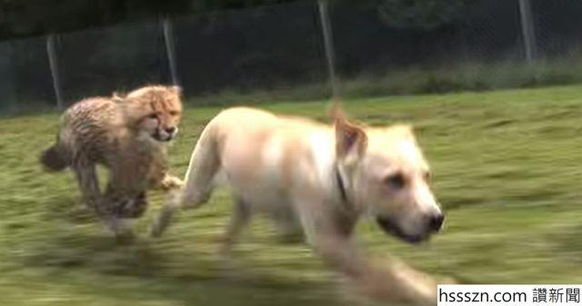 Kumbali-and-Kago-Cheetah-Cub-Puppy-Friendship_1200_630