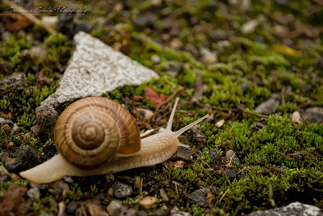 The snail way