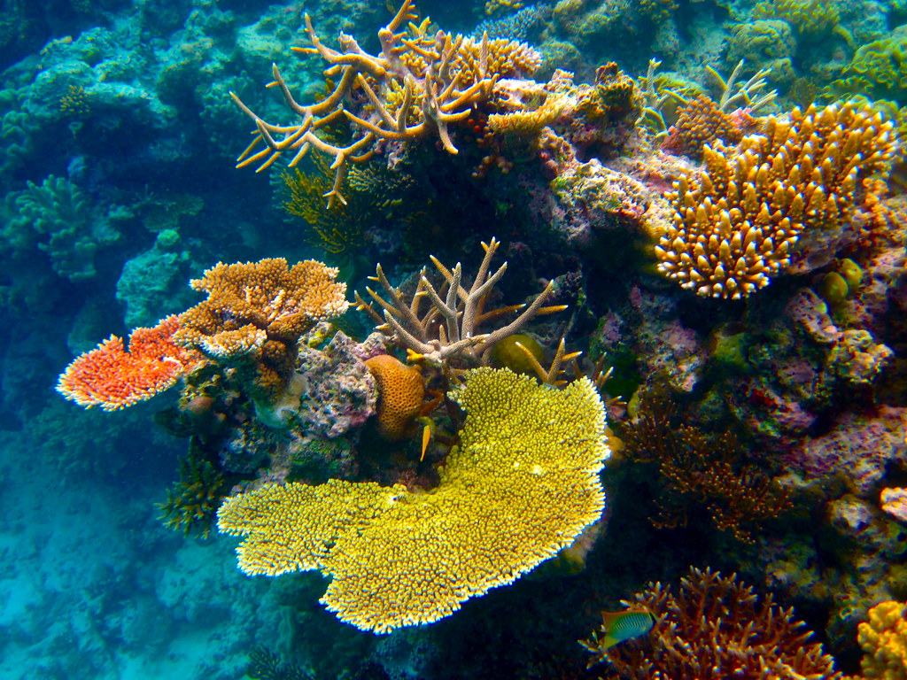 The Omniscient Eye The Great Barrier Reef