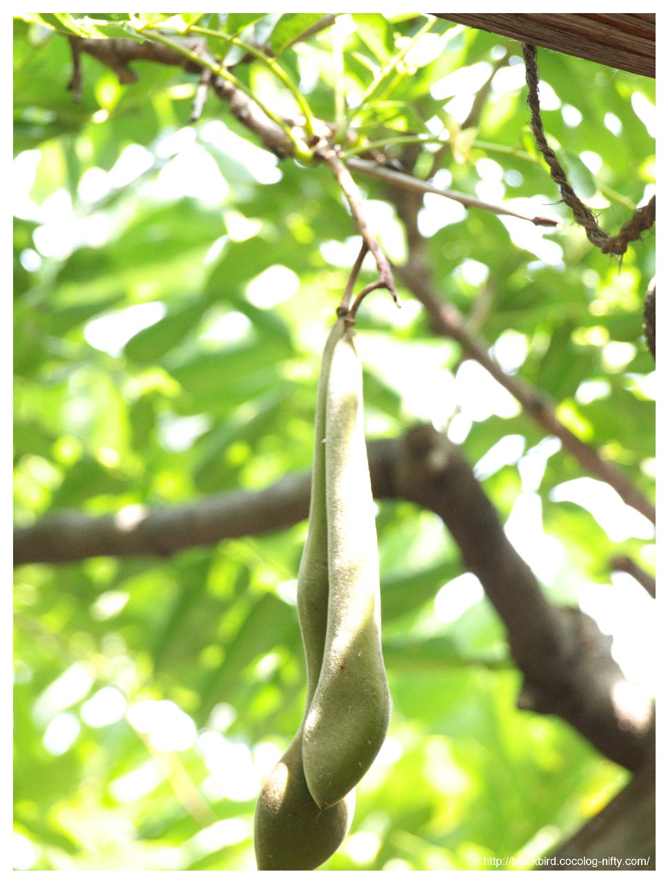 critical essay on the bean trees The bean trees study guide contains a biography of essay editing services literature the portion of this history critical to the novel begins in 1978 with.