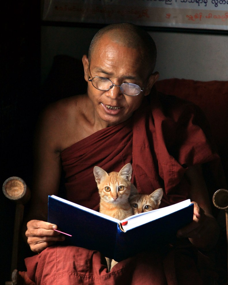 Monk Chanting with Kittens